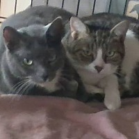 Adopt A Pet :: Tango and Cash - Orange City, FL