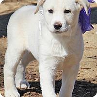 Adopt A Pet :: Kiara / pup - adopted - Beacon, NY