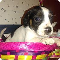 Adopt A Pet :: Lea - Cincinnati, OH