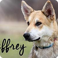 Adopt A Pet :: Jeffrey - Joliet, IL