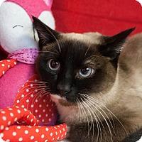 Adopt A Pet :: Boo - Muskegon, MI