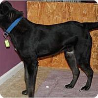 Adopt A Pet :: Rex - Westfield, IN