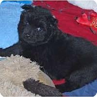 Adopt A Pet :: Zoey - Minneola, FL