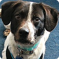 Adopt A Pet :: Maddie - Cookeville, TN