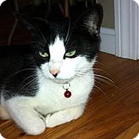 Adopt A Pet :: Kimberly - Riverside, RI