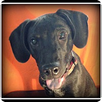 Adopt A Pet :: King - Indian Trail, NC