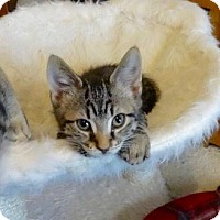 Adopt A Pet :: Cody -Adoption Pending! - Colmar, PA