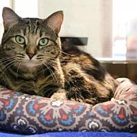 Adopt A Pet :: Stells - Roseville, CA