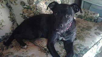 Labrador Retriever Mix Dog for adoption in Demorest, Georgia - Akoya
