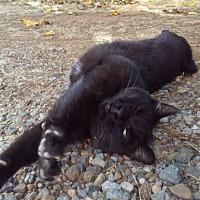 Adopt A Pet :: Cheryl - Palo Cedro, CA