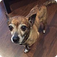 Adopt A Pet :: Diego - Joliet, IL