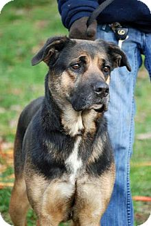 Shepherd (Unknown Type) Mix Dog for adoption in Tinton Falls, New Jersey - Gilly