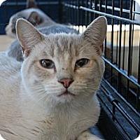 Adopt A Pet :: Fezick - Santa Monica, CA