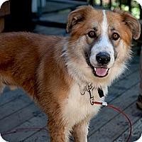 Adopt A Pet :: Rascal wants family - Sacramento, CA