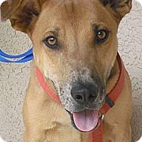 Adopt A Pet :: Oliver - Wickenburg, AZ