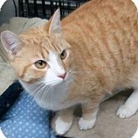 Adopt A Pet :: Cheerio - Anchorage, AK