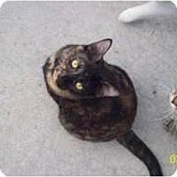 Adopt A Pet :: Kendra - Naples, FL