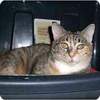 Adopt A Pet :: Helen - Lombard, IL