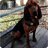 Adopt A Pet :: Loretta - Harrisburgh, PA