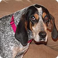 Adopt A Pet :: Stella Sue - Leesburg, VA