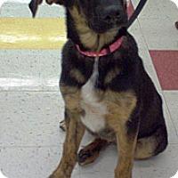 Adopt A Pet :: Summer - Evergreen Park, IL