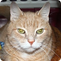 Adopt A Pet :: Morris - North Branford, CT