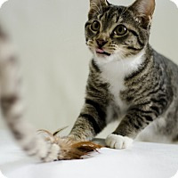 Adopt A Pet :: Kaa - Jefferson, NC