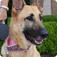 Adopt A Pet :: Gemma - Greensboro, NC