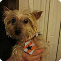 Adopt A Pet :: Bam Bam - Foster, RI