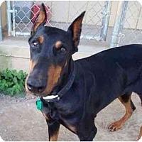 Adopt A Pet :: Jade--help needed! - New Richmond, OH