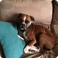 Adopt A Pet :: Parker - Springfield, MO