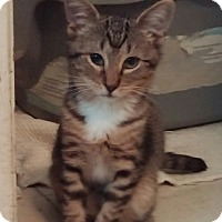 Adopt A Pet :: Nelson - Cocoa, FL