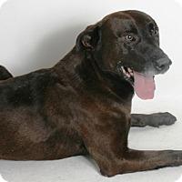 Adopt A Pet :: Dingo - Redding, CA