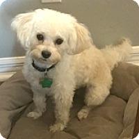 Adopt A Pet :: Jackson - Melbourne, FL