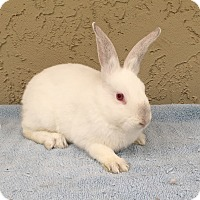 Adopt A Pet :: Scooter - Bonita, CA