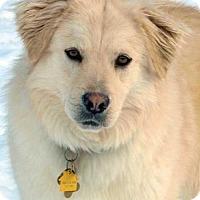 Adopt A Pet :: Turner in NY - Beacon, NY