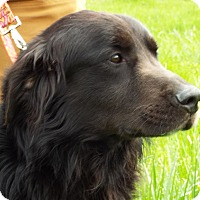 Adopt A Pet :: Grim - Grants Pass, OR