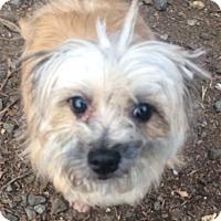 Adopt A Pet :: Lena - Oak Ridge, NJ