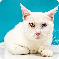 Adopt A Pet :: Phineas - Chandler, AZ
