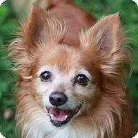 Adopt A Pet :: Calvin - Cookeville, TN