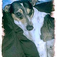 Adopt A Pet :: Ryah - Hartsville, TN