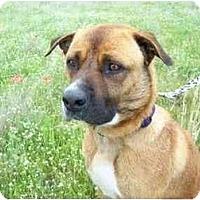 Adopt A Pet :: Kirby - Kaufman, TX