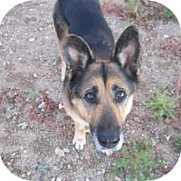 Adopt A Pet :: Luna - Santa Fe, NM