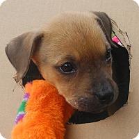 Adopt A Pet :: Treacie - Marlton, NJ