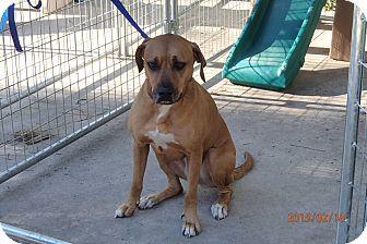 Hound (Unknown Type) Mix Dog for adoption in Malabar, Florida - Trixie