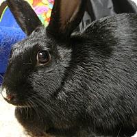 Adopt A Pet :: Keli - Newport, DE