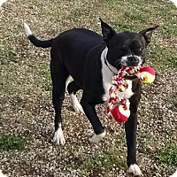 Adopt A Pet :: Violet - Geneseo, IL