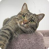Adopt A Pet :: Lester - Roseville, MN