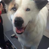 Adopt A Pet :: Belle - Ball Ground, GA