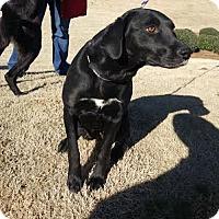 Adopt A Pet :: Whitney - Cumming, GA